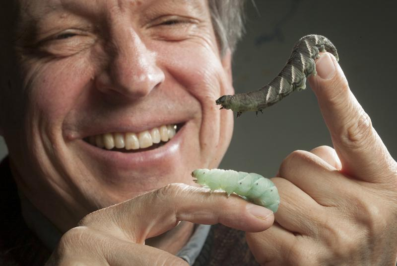 Fred Nijhout with tobacco hornworms