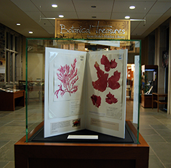 The Botanical Treasures exhibit will remain in Perkins Library until July 14. Photo by Marsha A. Green.