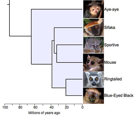 Проблемы Эволюции