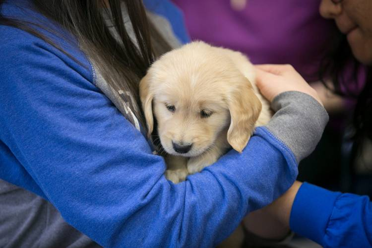 Cuddling with an assistance dog in training. Photo by Megan Mendenhall/Duke Photography