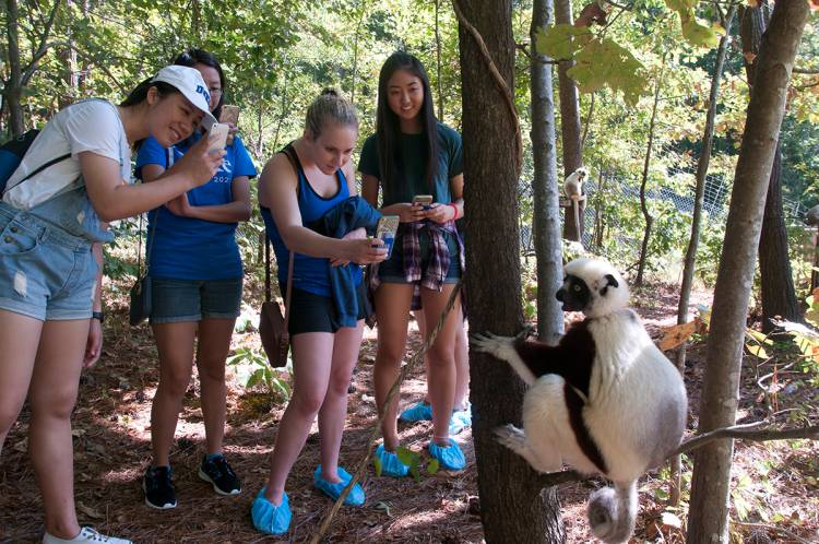 FOCUS students working with Anita Layton get close to lemurs during a tour of the Duke Lemur Center. Photo by Susie Post-Rust