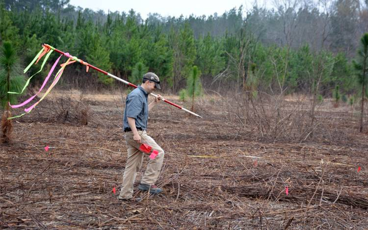 Tom Craven, forest supervisor, uses a pole to measure and mark the six-foot separation distance needed to plant the Longleaf Pine seedlings.