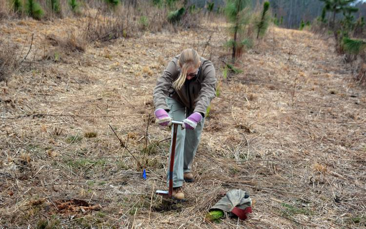Sara Childs, director of Duke Forest, digs through a patch of dirt and clay.