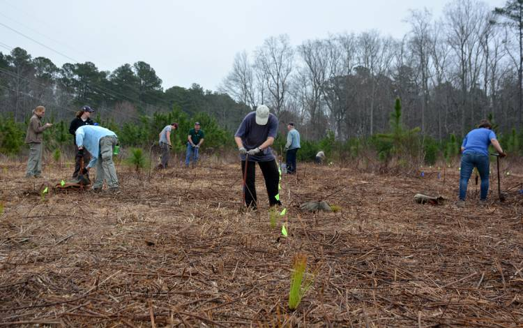 Volunteers and Duke Forest staff worked for about four hours to plant trees around the Couch Mountain area of the forest's Durham Division.