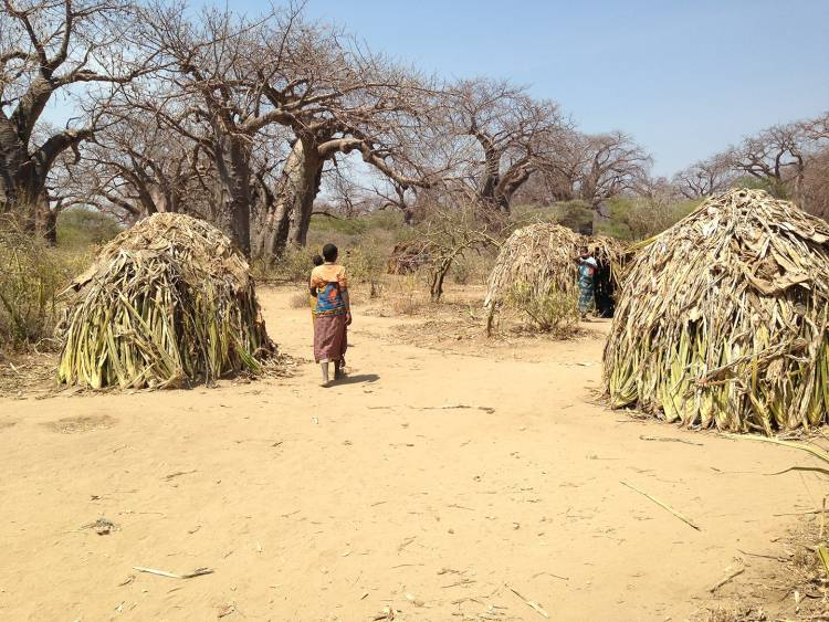 The Hadza people of northern Tanzania sleep in huts made of woven grass and branches. Photo by Peter Ungar, University of Arkansas