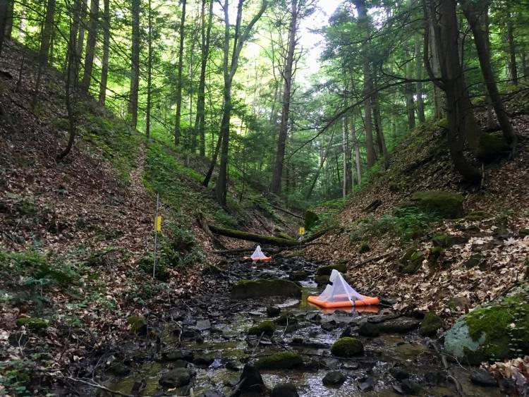 Decades of mining in southern West Virginia have filled streams with chemical contaminants. A study finds that spiders eating their normal diet of stream insects ingest the contaminants at levels that could be toxic to other animals up the food chain.