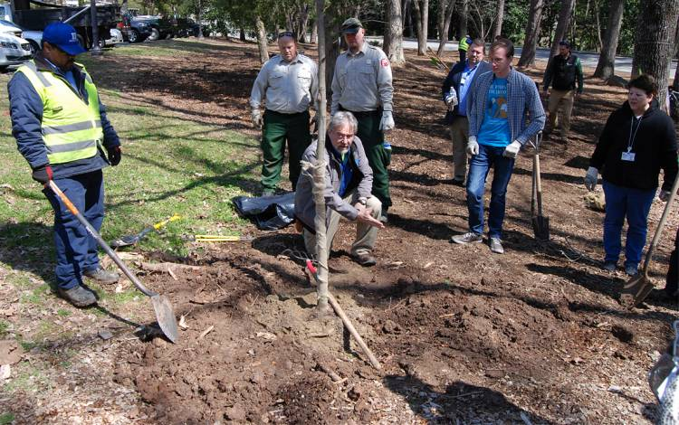 Mark Carpenter helps a group of people planting a tree.