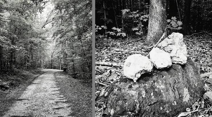Black and white photos of trees and rocks in Duke Forest.