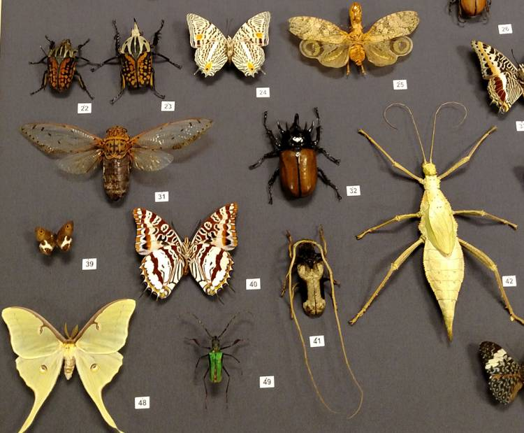 The library exhibit explores the exceptional diversity of insect species. Photo by Margaret Brown