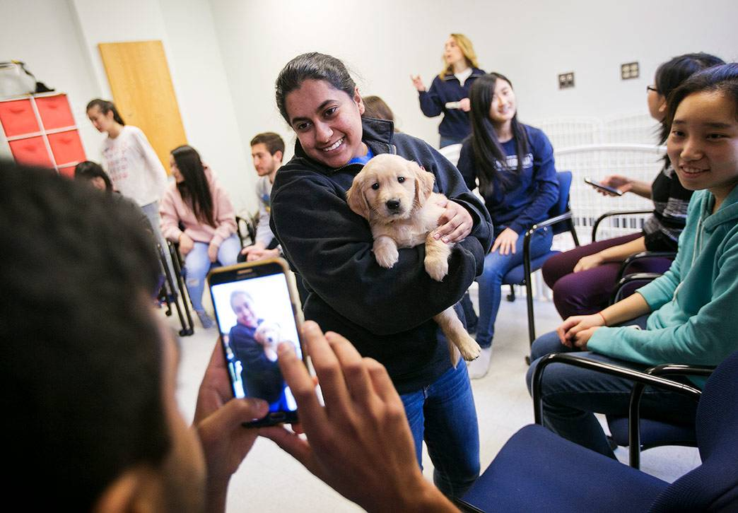 Students helped socialize two 6-week old golden retriever puppies as part of their class. The puppies, MATTOX and CHESSIE, are in training to become assistance dogs through the paws4people foundation. Photo by Megan Mendenhall/Duke Photography