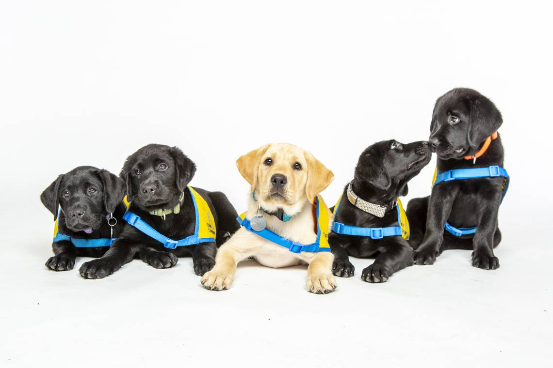 puppies at a class photo shoot at the Canine Cognition Center.