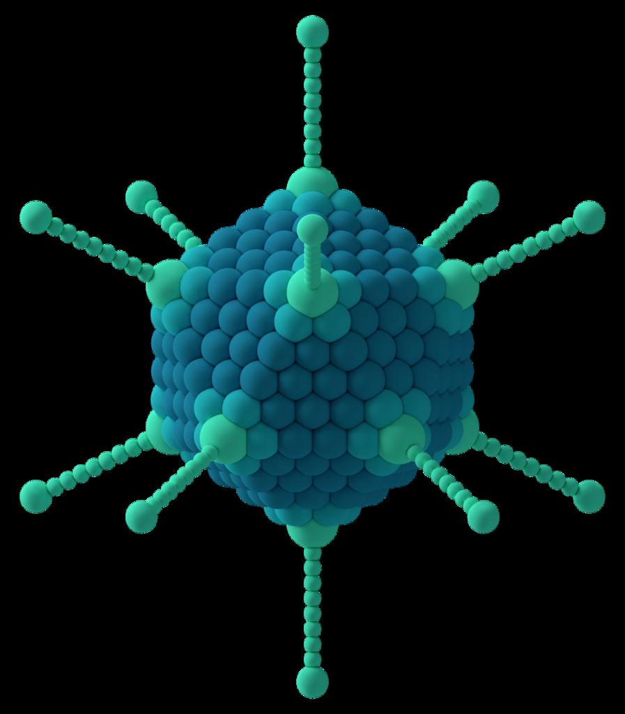 3D rendering of adenovirus structure by Thomas Splettstoesser, via Wikimedia Commons