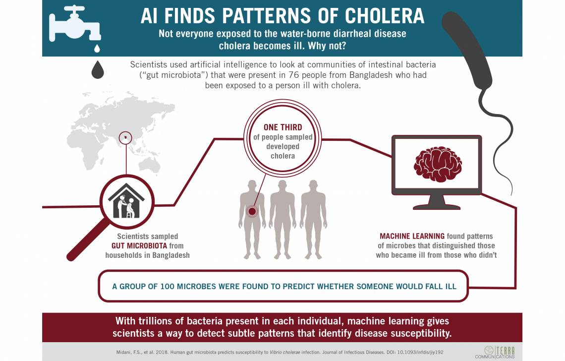 Artificial intelligence detects patterns of gut microbes indicative of cholera risk. (Terra Communications)