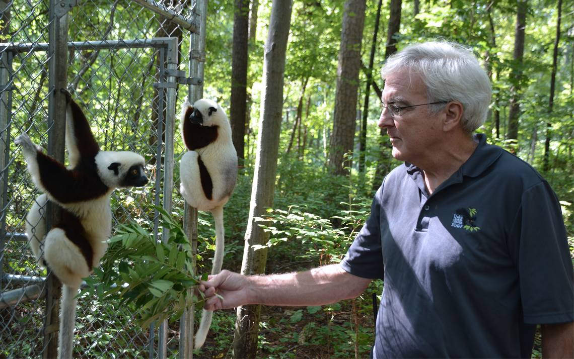 David Haring feeds two sifaka lemurs sumac leaves. Photo by Jonathan Black.