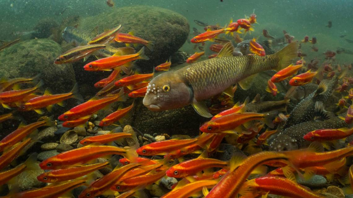 Mountaintop mining threatens streams in the Appalachian region, a global hotspot of biodiversity. Credit: David Herasimtschuk, Freshwaters Illustrated
