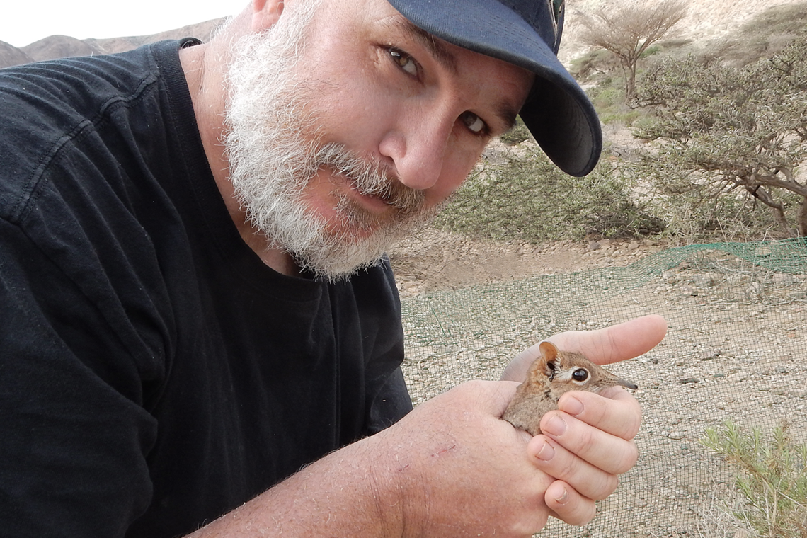 Steven Heritage holds one of the rediscovered Somali Sengis in the field in Djibouti.