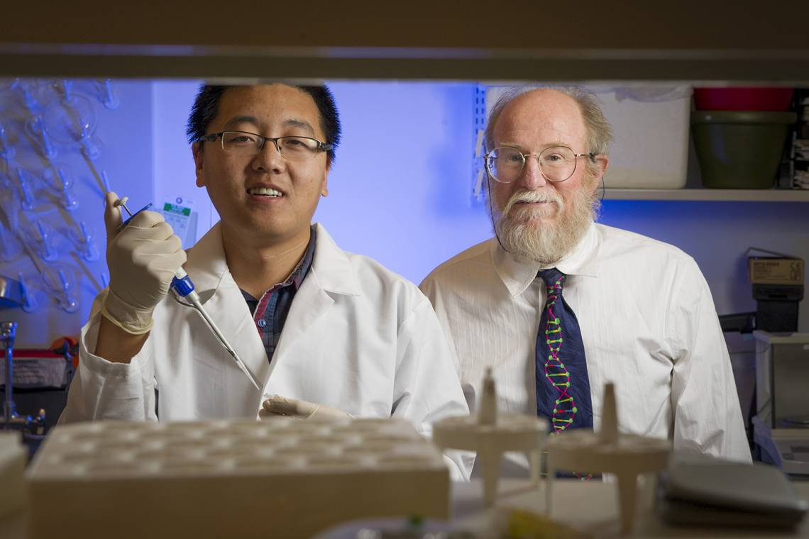 Duke graduate student Tianqi Song and computer science professor John Reif have created an analog DNA circuit that can add, subtract and multiply as the molecules form and break bonds. Photo by John Joyner.