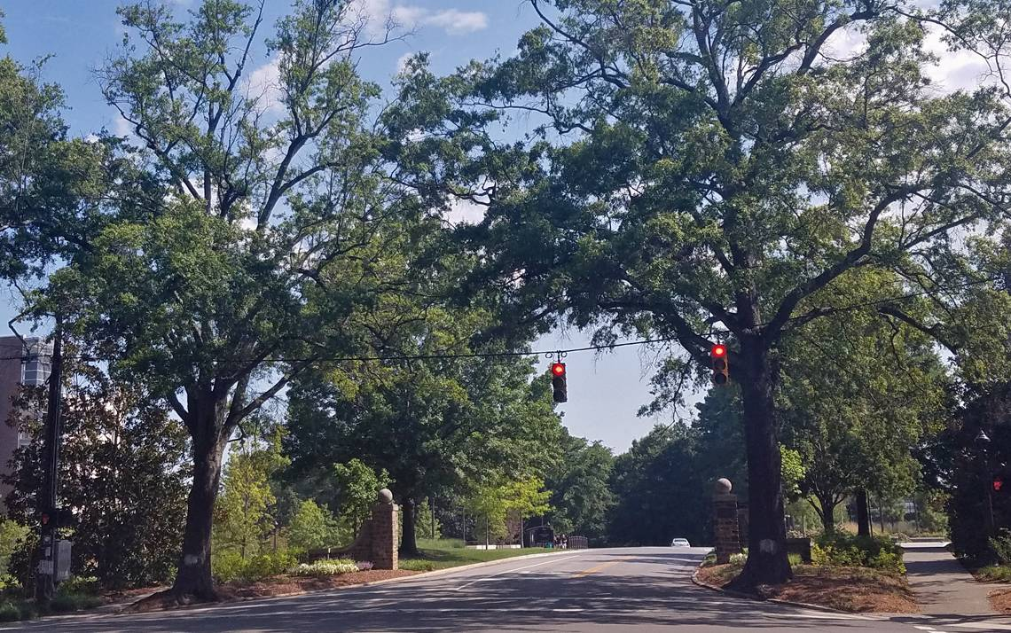 Two 80-year-old willow oaks on both sides of the intersection at Science Drive will be removed from Duke property due to decay.