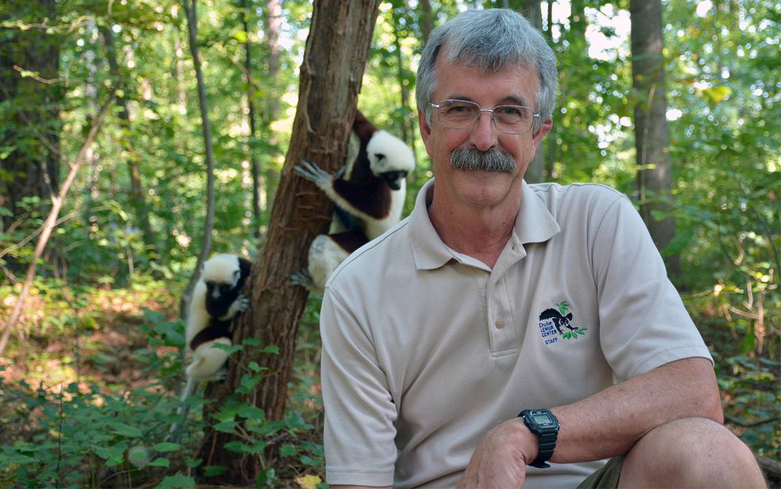 Two Coquerel's Sifaka lemurs climb a tree behind Charlie Welch at the Duke Lemur Center.