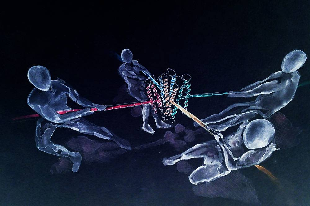 This artistic interpretation shows people tugging on a mysterious force-sensing receptor called Piezo1, which Duke researchers have found a new approach to study its functions. Credit: Jason Wu.
