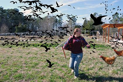 Duke Campus Farm's Emily McGinty and volunteers were chased by aggressive birds last Friday, halting planting and scattering individuals in the woods.