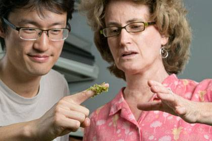 Fay-Wei Li and Kathleen Pryer with a sample of the azolla fern. Photo by Les Todd/Duke University Photo