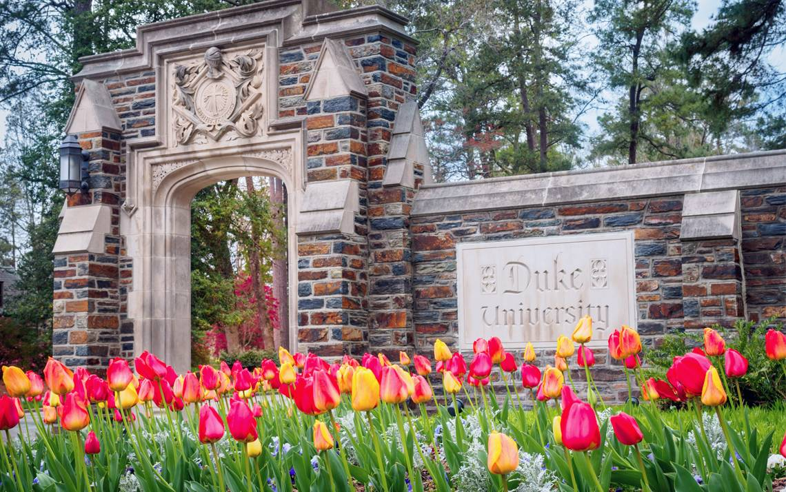 Blooming tulips near the Duke University Road entrance to campus present a beautiful welcome to visitors.