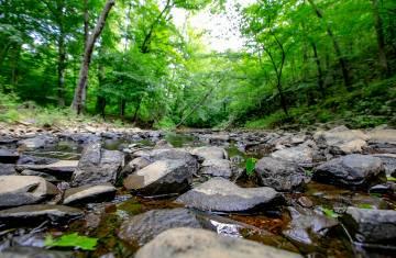 A stream runs through it: Photo of Duke Forest