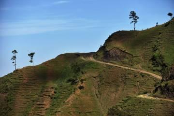 Laurent DuBois on reforesting Haiti