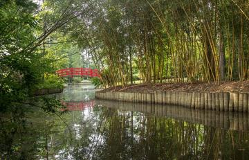 Asiatic. Arboretum in Duke Gardens