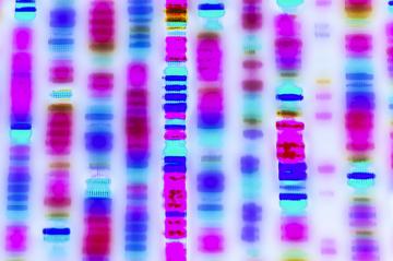 DNA strip