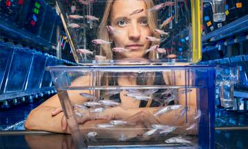 Neurobiologist Eva Naumann with zebrafish
