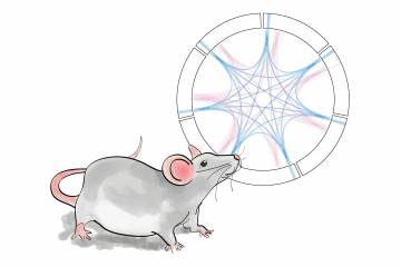 An illustrated mouse stands next to a network diagram