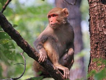 We never forget our torments. Even our DNA has a molecular memory of being bullied, finds a new study of rhesus monkeys.