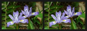 stereo photography from Duke Forest