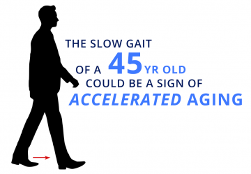 A long-term study has found that signs of aging may be detected by a simple walking test at age 45, and that the brains of slower walkers were different at age 3.
