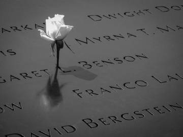A rose at the 9/11 Memorial in New York City. Photo by Ben Lei via Unsplash.