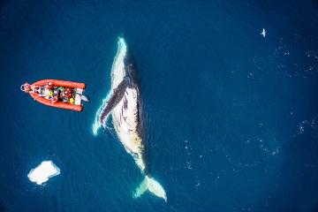 photo of whale. Photo by KC Bierlich / Duke Marine Robotics and Remote Sensing Lab