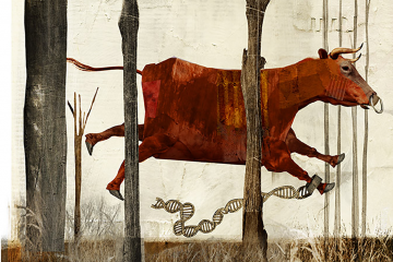 Graphic of 1900s cow and its owner. Image by ANTONELLO SILVERINI