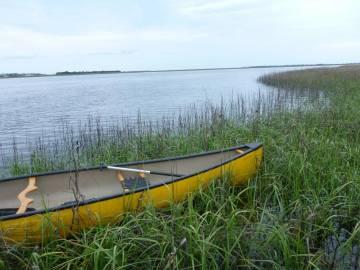 wetlands images