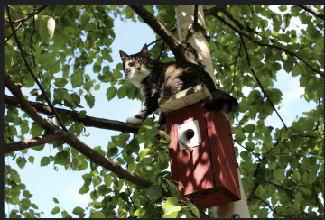 Lane Scher: To Save Birds, Keep Your Cat Indoors