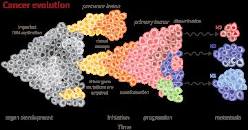 Diagram of cancer evolution