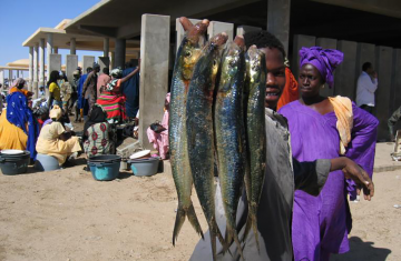 Policies that more strongly recognize the value of sustainable seafood as a source of nutrition, not just a source of livelihoods, could strengthen global food security and help take a big bite out of world hunger, a new analysis by an international team