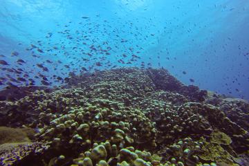 fish swimming near an ocean coral