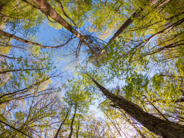 image of trees in a forest taken from the ground looking skyward