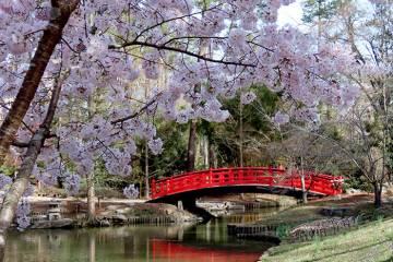 Sarah P. Duke Gardens' iconic red bridge has been named the Meyer Bridge