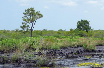 image of a Southern peat field
